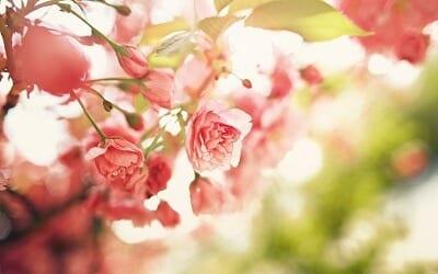 floare de 8 martie